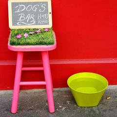 Dog Bar in Paris