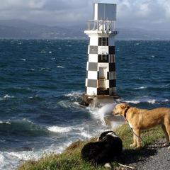 Dogs at Point Halswell
