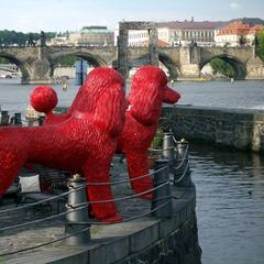 Red Poodles in Prague