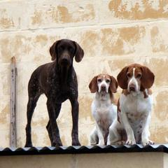 Three Dogs on a Roof