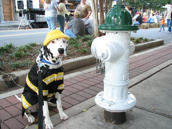 Fire Dog in New York