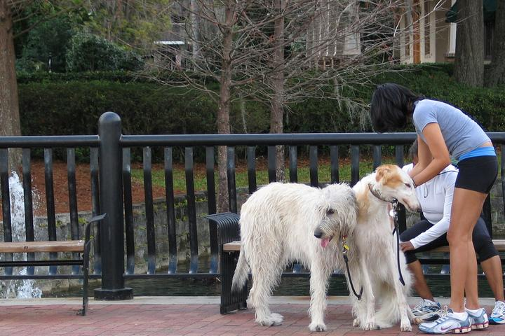 Pet Friendly Lake Eola Park