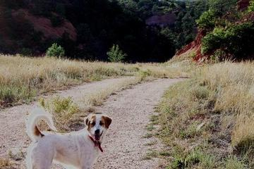 Pet Friendly The Colorado Trail