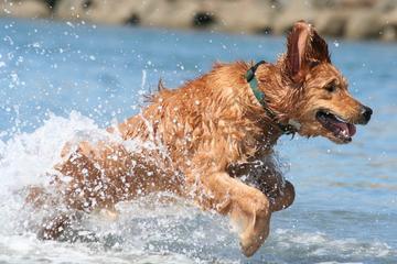Pet Friendly The Original Dog Beach