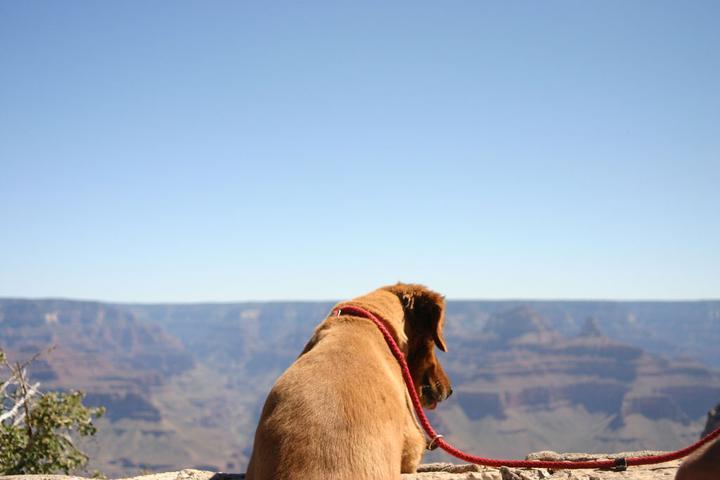 Pet Friendly Grand Canyon National Park