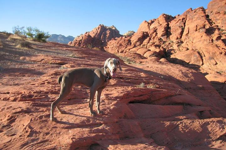Pet Friendly Red Rock Canyon National Conservation Area