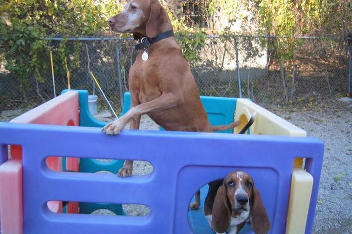 Pet Friendly Pet Companions Bed & Biscuit