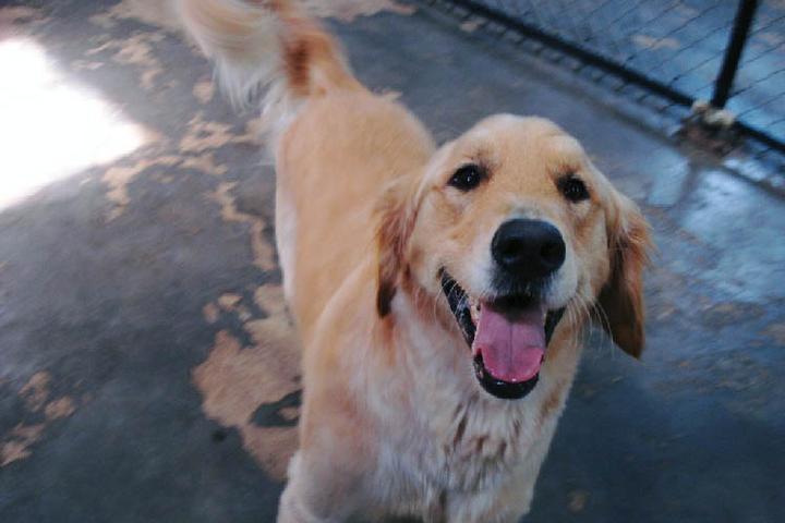 Pet Friendly Piedmont Bark