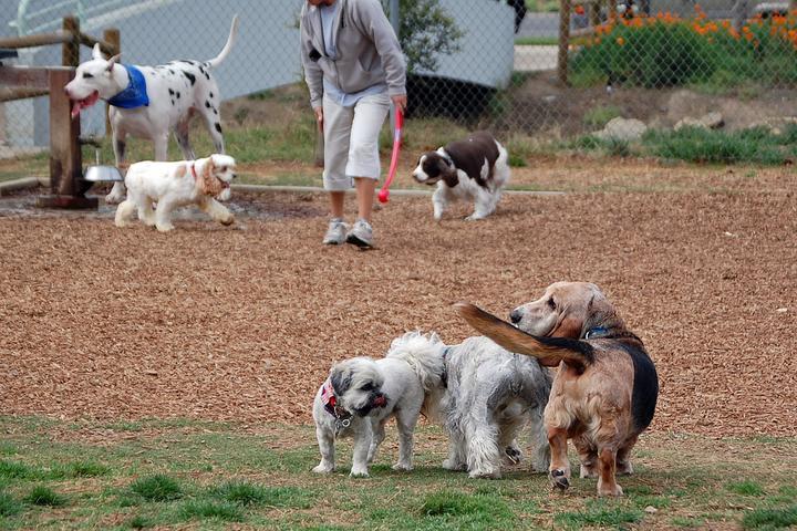 Pet Friendly Laguna Beach Dog Park