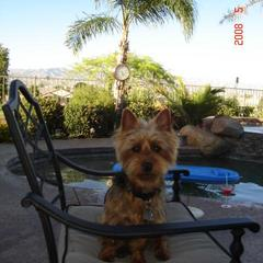 Charlie does Palm Springs