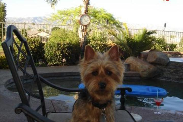 Dog Owner's Guide to  Palm Springs, CA