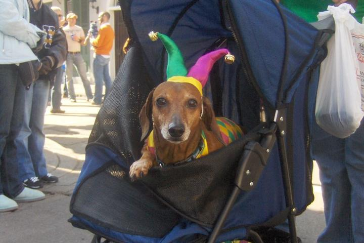Pet Friendly The French Quarter
