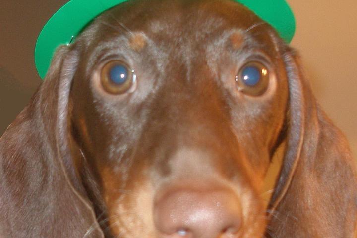 Dog Owner's Guide to Birmingham, AL