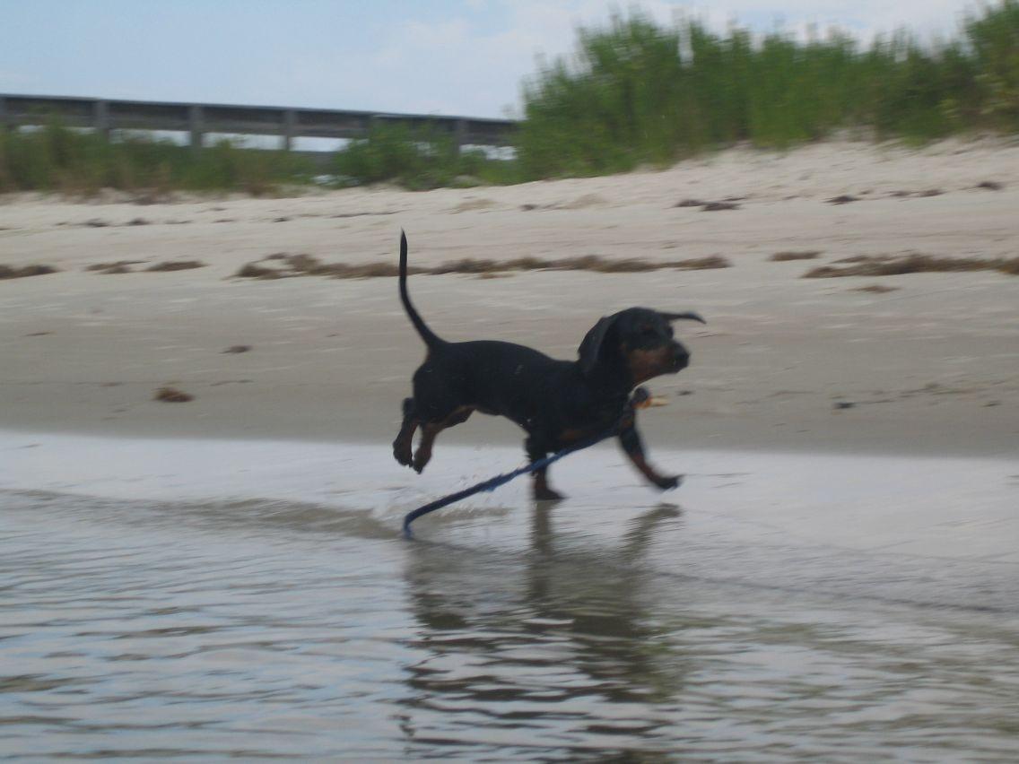 Dog Friendly Motels In New Smyrna Beach Fl