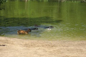 Pet Friendly Soldan Dog Park