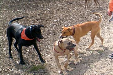 Pet Friendly Quarry Run Dog Park