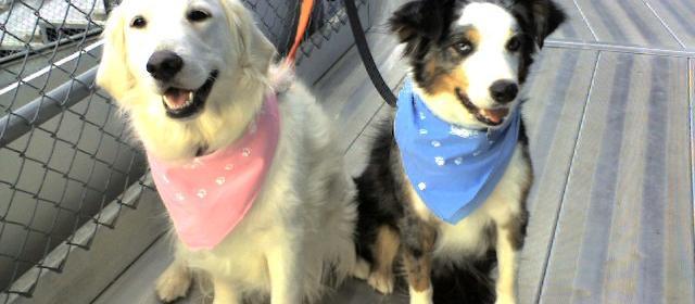 Dog Friendly Tulsa, OK - Bring Fido