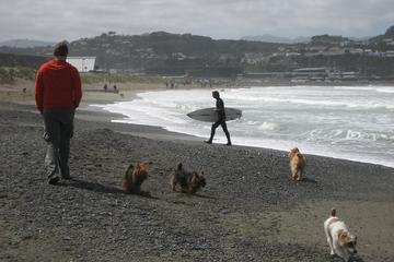 Pet Friendly Lyall Bay Beach