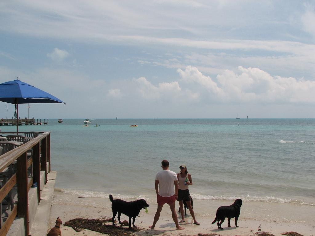 Key Largo Dog Boarding