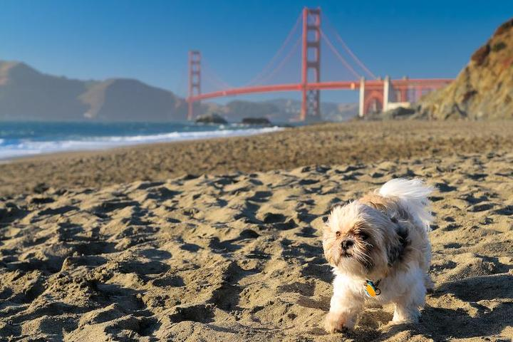 Pet Friendly Baker Beach