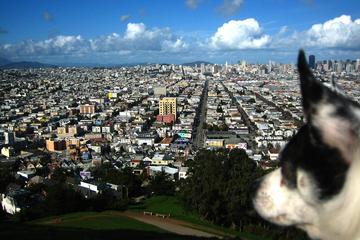 Pet Friendly Bernal Hill Dog Park at Bernal Heights