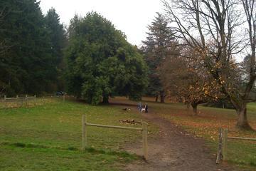 Pet Friendly Chimney Park