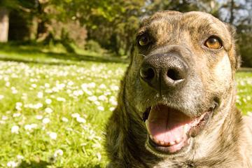 Pet Friendly Golden Gate Park