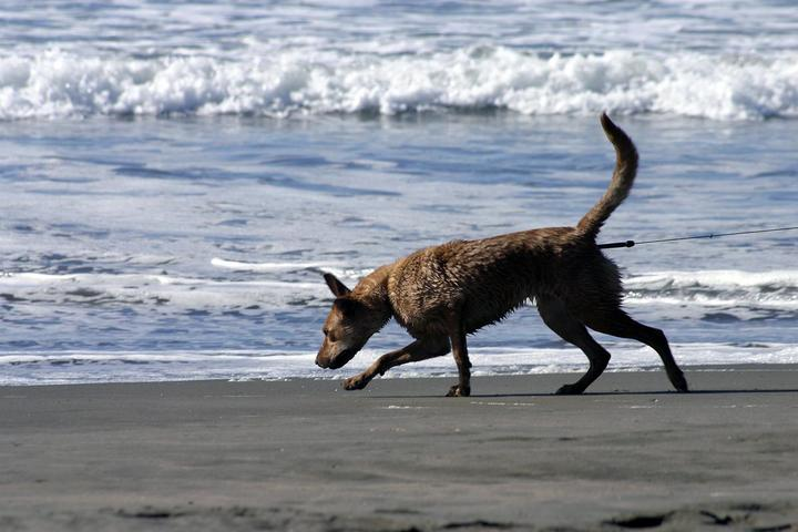 Pet Friendly Ocean Beach