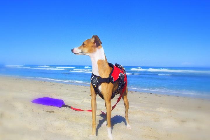 Pet Friendly Walton Rocks Dog Beach