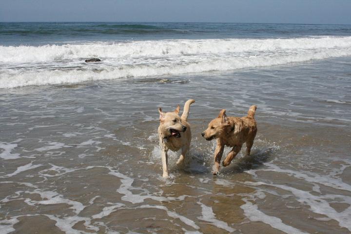 Pet Friendly Arroyo Burro Beach (Hendry's Beach)
