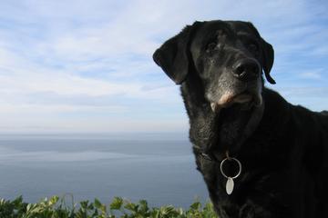 Pet Friendly Douglas Family Preserve