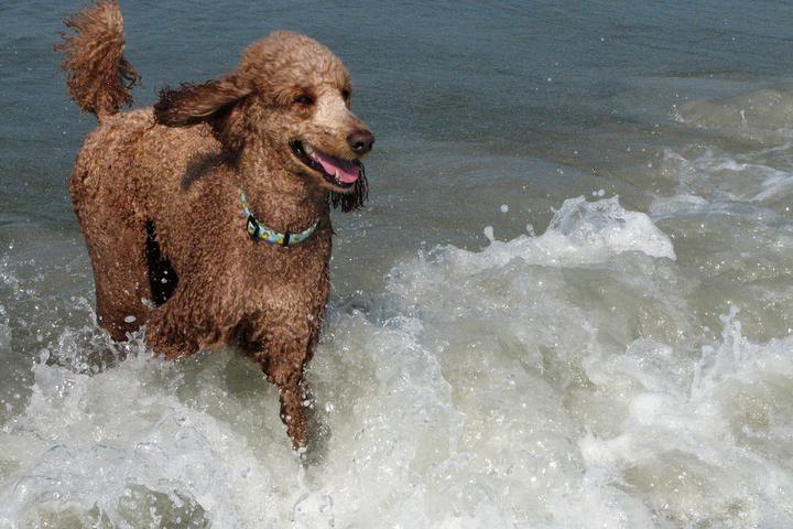 Pet Friendly Alder Lane Beach Access