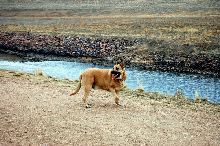 Pet Friendly Chatfield State Park Off-Leash Dog Area
