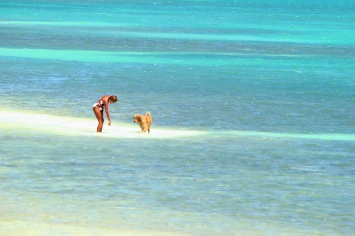 Pet Friendly Anne's Beach
