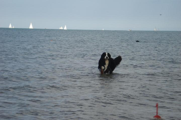 Dog Friendly Beaches in Wilmette, IL - Bring Fido