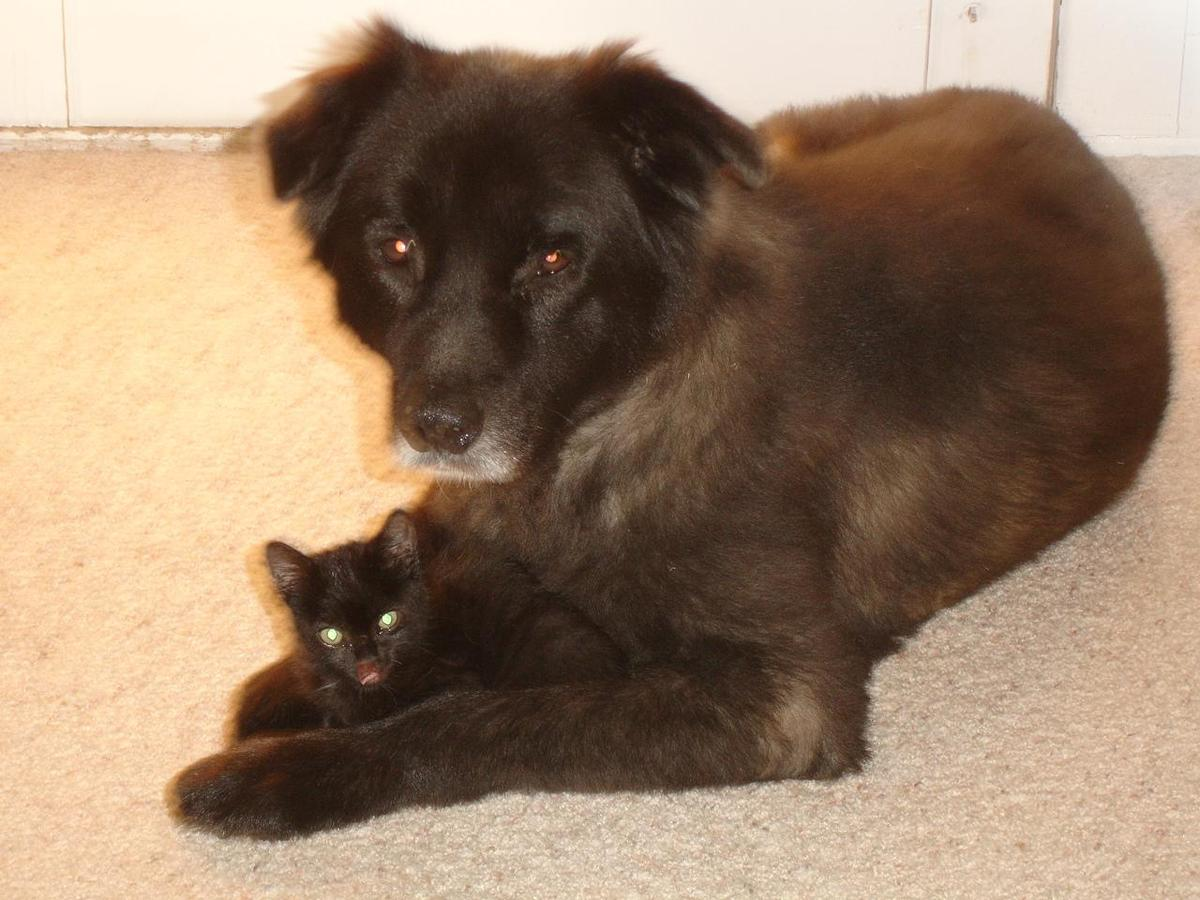 Bear seems to adopted a kitten
