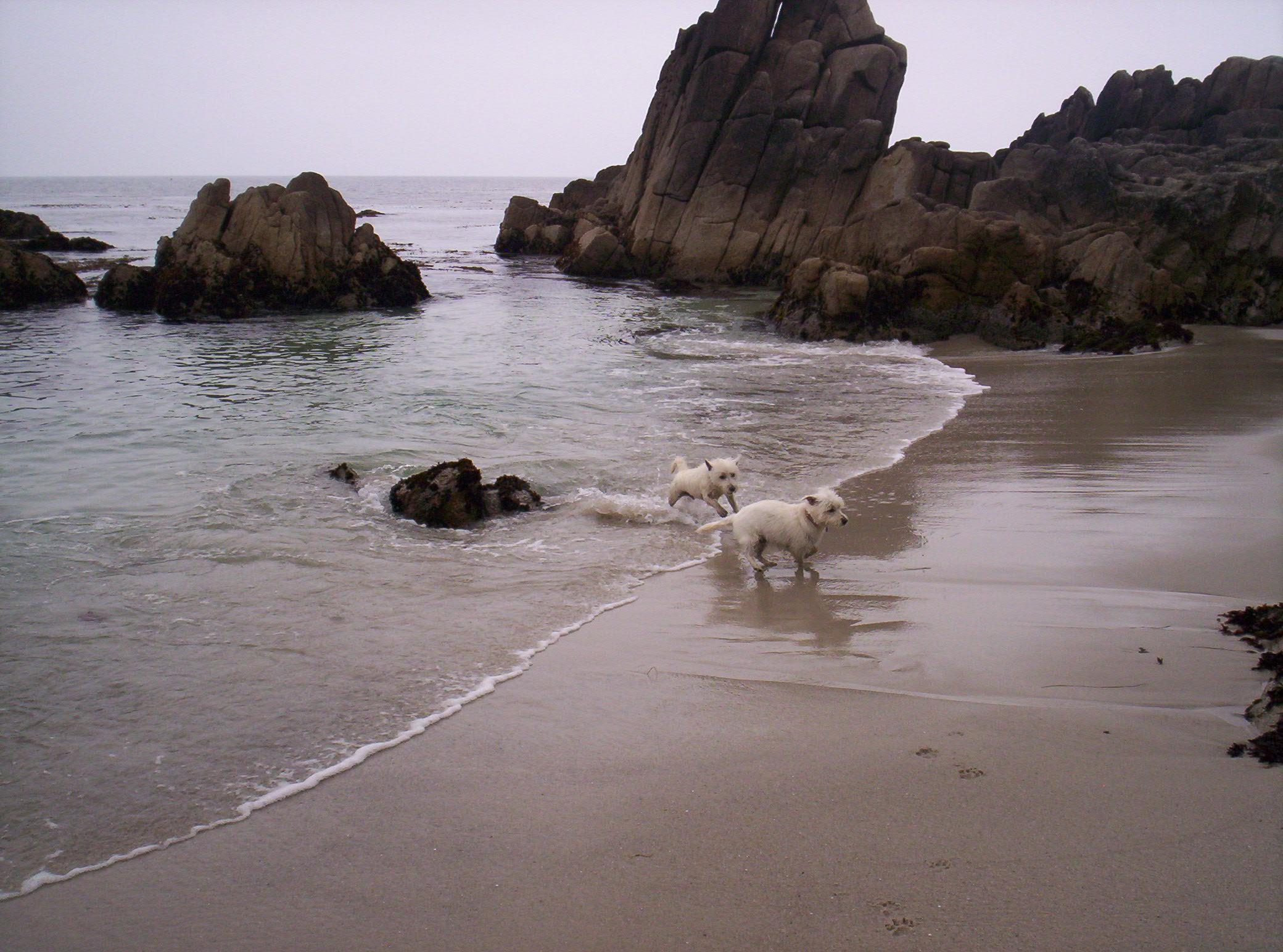 Pacific Grove Dog Friendly Hotels