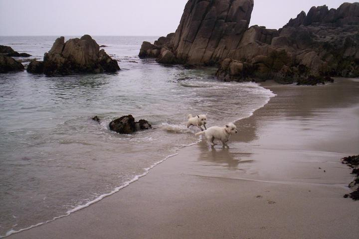 Dog Owner's Guide to Pacific Grove, CA