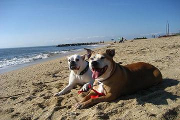 Pet Friendly Sunset Beach