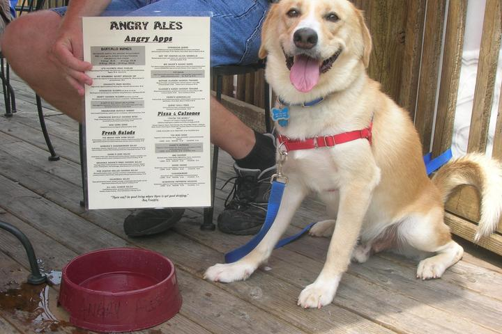 Pet Friendly Angry Ale's
