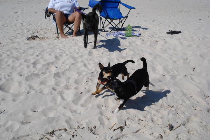 Dog Owner's Guide to Gulfport, MS