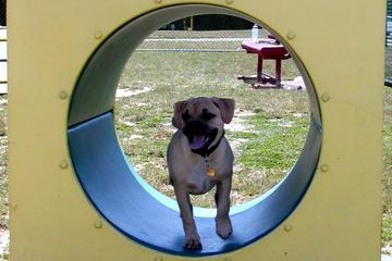 Pet Friendly Veterans Memorial Park