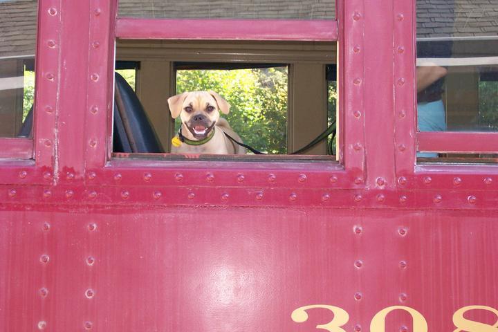 Pet Friendly Lehigh Gorge Scenic Railway