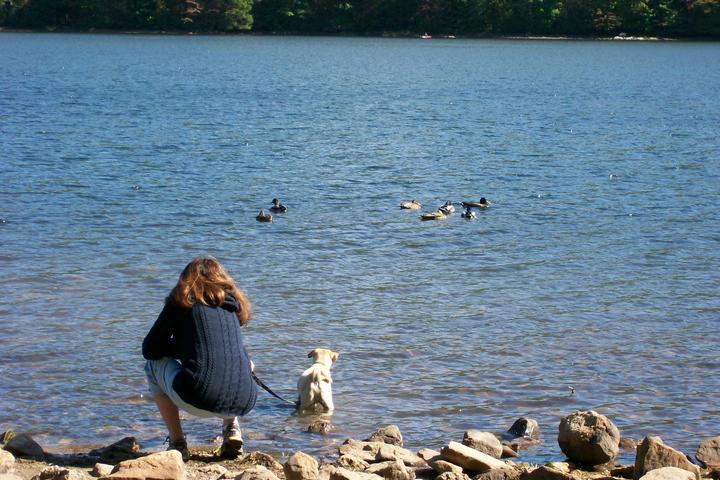 Pet Friendly Mauch Chunk Lake Park