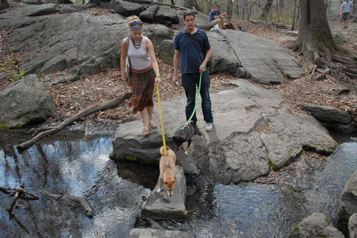 Pet Friendly Central Park