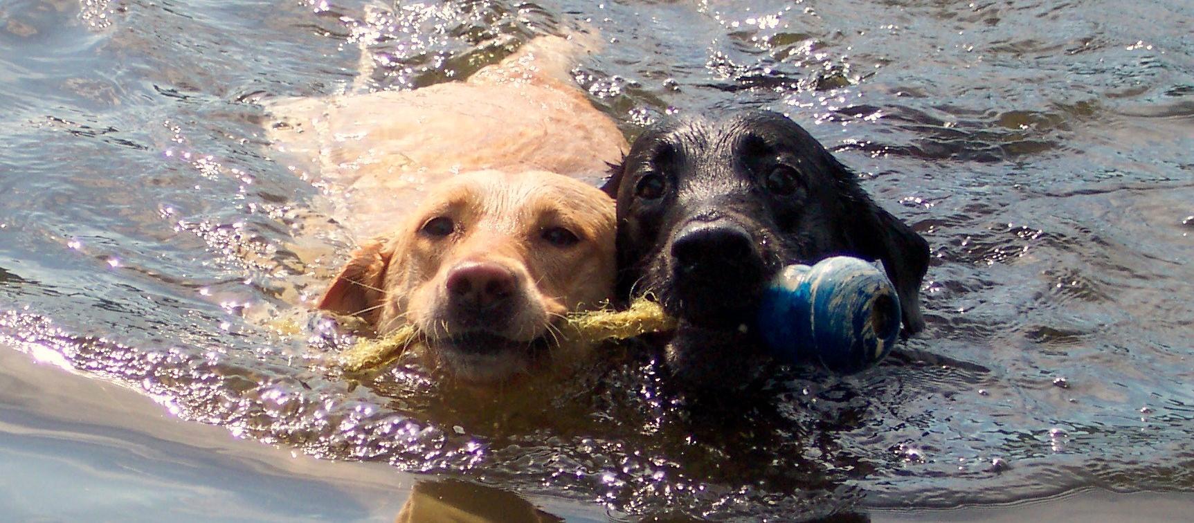 Dog Friendly New Hampshire Bringfido