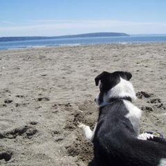 Rascal enjoys the view on his beach vacation