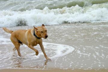 Pet Friendly Montauk Beach