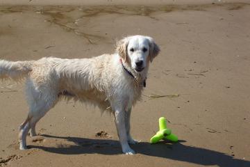 Pet Friendly Race Point Beach