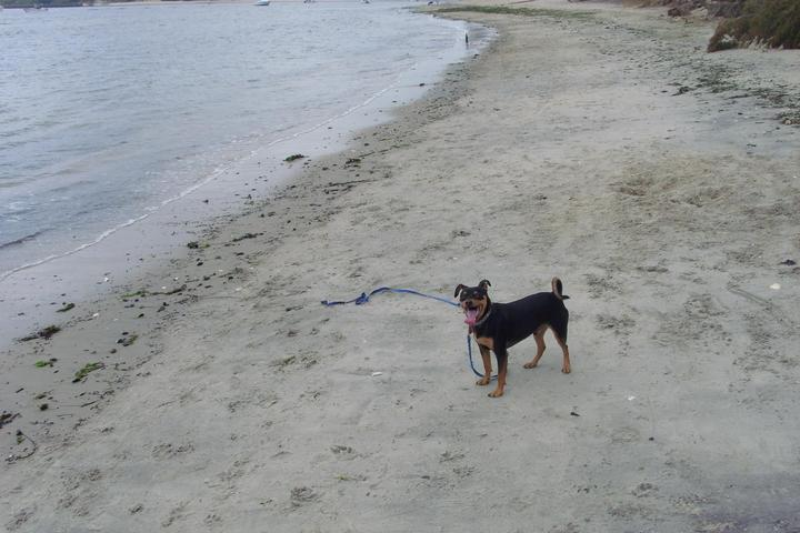Pet Friendly Fisherman's Cove Conservation Area